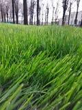 Árvores de grama bonitas da natureza da mola Foto de Stock Royalty Free