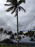 Árvores de Havaí na ilha grande Havaí foto de stock royalty free