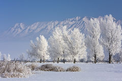 Árvores de Hoarfrosted Foto de Stock Royalty Free