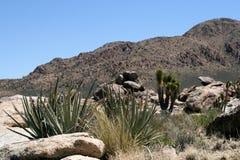 Árvores de Joshua no deserto de Mojave, Califórnia fotografia de stock