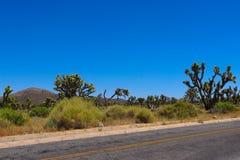 Árvores de Joshua pela estrada imagens de stock royalty free
