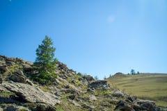 Árvores de larício no estepe rochoso perto do Lago Baikal imagens de stock