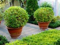 Árvores de louro Imagem de Stock Royalty Free