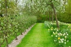 Árvores de maçã de florescência e grama verde Fotos de Stock