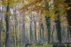 Árvores de madeira Imagens de Stock