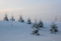 Árvores de Natal Fotografia de Stock Royalty Free