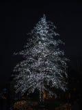 Árvores de Natal Imagens de Stock Royalty Free