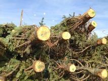 Árvores de Natal Foto de Stock