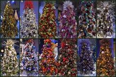 Árvores de Natal Foto de Stock Royalty Free