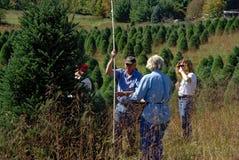 Árvores de Natal de medição do grupo Imagem de Stock