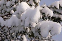Árvores de Natal na neve imagem de stock