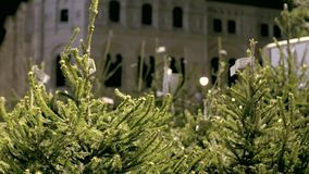 Árvores de Natal para a venda video estoque