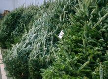 Árvores de Natal para a venda Imagem de Stock