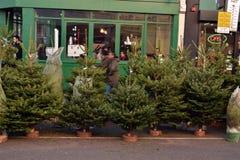 Árvores de Natal para a venda Imagem de Stock Royalty Free