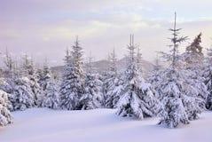 Árvores de Natal sob nevadas fortes Imagens de Stock