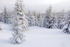 Árvores de Natal sob nevadas fortes Imagem de Stock Royalty Free