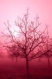 Árvores de noz desencapadas do tom cor-de-rosa Imagem de Stock