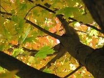 Árvores de observação de baixo de imagem de stock
