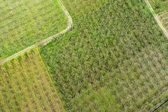 Árvores de pêssego de florescência das fotografias aéreas em um pomar imagens de stock