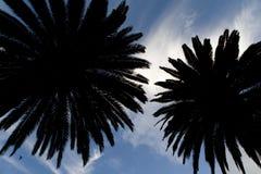 Árvores de palmas Fotografia de Stock Royalty Free