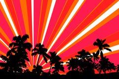 Árvores de palmas da silhueta com raias do sol do vetor Imagem de Stock Royalty Free