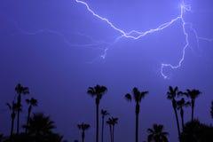Árvores de palmas e um temporal do relâmpago Imagem de Stock Royalty Free