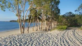 Árvores de Paperbark na grande ilha de Keppel Fotografia de Stock Royalty Free