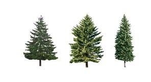 Árvores de pinho Imagens de Stock Royalty Free