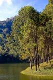 Árvores de pinho com céu azul Imagens de Stock Royalty Free