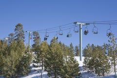 Árvores de pinho de Califórnia e elevador de esqui Fotografia de Stock
