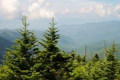 Árvores de pinho nas montanhas fumarentos Imagens de Stock