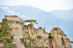 Árvores de pinho nos penhascos íngremes Imagens de Stock