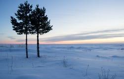 Árvores de pinho pelo mar Imagem de Stock