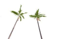 Árvores de Plam no branco Imagem de Stock
