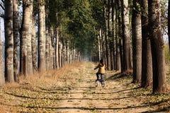 Árvores de poplar do vesture da névoa Fotografia de Stock
