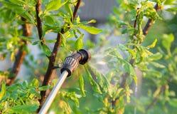 Árvores de pulverização com inseticidas fotografia de stock royalty free
