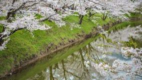 Árvores de Sakura da reflexão em Ueda Castle Ruins Imagens de Stock