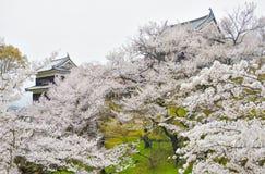 Árvores de Sakura da reflexão em Ueda Castle Ruins Imagens de Stock Royalty Free