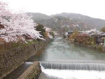 Árvores de Sakura e o rio em Arashiyama, Kyoto, Japão foto de stock