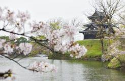 Árvores de Sakura em ruínas do castelo de Takada Fotos de Stock Royalty Free