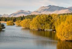 Árvores de salgueiro amarelas no lago Tekapo em Nova Zelândia Fotografia de Stock Royalty Free