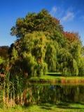 Árvores de salgueiro bonitas Imagens de Stock