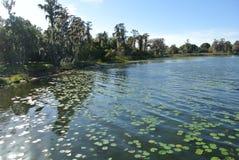 Árvores de salgueiro com lillies verdes da água foto de stock royalty free
