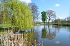 Árvores de salgueiro em uma ilha de um lago Fotos de Stock