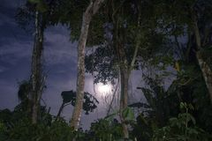 Árvores de seda e o céu no tiro da noite foto de stock royalty free