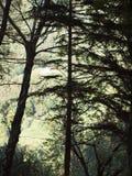 Árvores de Seitzerland Fotos de Stock