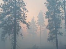 Árvores de Smokey Imagens de Stock Royalty Free