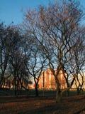Árvores de surpresa, dia bonito no parque fotografia de stock royalty free