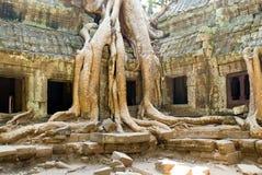Árvores de templo de Ta Prohm Fotos de Stock Royalty Free