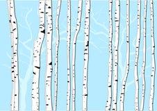 Árvores de vidoeiro ilustração royalty free